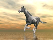Gypsy vanner horse running - 3D render. Beautiful gypsy vanner horse running upon water in front of cloudy sunset background Royalty Free Stock Photo
