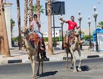 Ägypten. Sharm el Sheikh. 2 junge Männer auf Kamelen in den Straßen. Lizenzfreies Stockbild