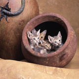 Ägyptische mau Katze Lizenzfreies Stockbild