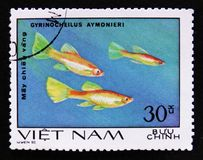 Gyrinocheilus aymonieri, Aquarium fishes serie, circa 1980 Royalty Free Stock Photos