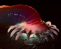 Gyrodactylus nadwodny darmozjad na skórze łosoś fotografia royalty free