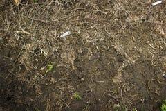 Gyttja, avfall och gräs Royaltyfri Fotografi