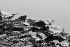 Gyttja i vatten Royaltyfri Foto