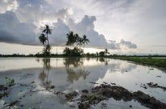 Gyttja med reflexion av kokospalmen Arkivfoton