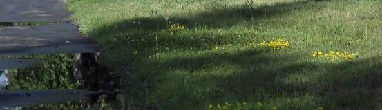 Gyttja och pölar på grusvägen royaltyfri foto