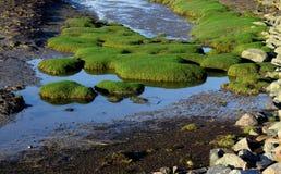 Gyttja på lågvatten av Nordsjön Arkivfoton