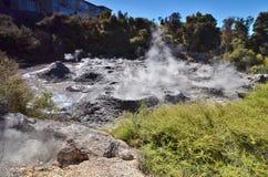 Gyttjapöl Whakarewarewa geotermisk reserv New Zealand Royaltyfri Bild
