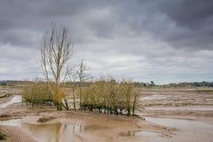 Gyttjiga landremsor för naturreserv fotografering för bildbyråer