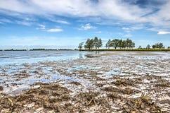 Gyttjiga landremsorna av den Tiengemeten ön royaltyfri fotografi