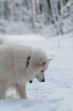 Há algo sob a neve? fotografia de stock