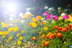 Há muitas flores na luz do sol Foto de Stock