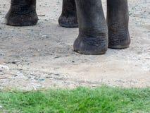Há muitos elefantes dispersos em Ásia fotografia de stock royalty free