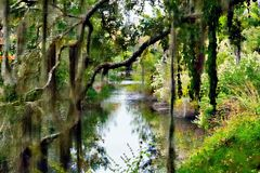 Há uma beleza em toda parte que você olha na conserva de natureza do pântano foto de stock