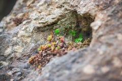 Hábitat micro de la roca - hacer frente a adversidad imagen de archivo libre de regalías