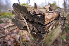 Hábitat natural para los insectos en el bosque por la mañana Madera putrefacta como protección para preservar biodiversidad fotografía de archivo libre de regalías