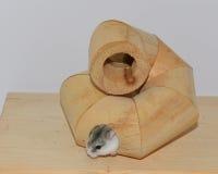 Hámster en el espiral de madera fotos de archivo