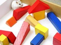 Hámster en laberinto Foto de archivo libre de regalías