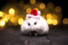 Hámster lindo con el sombrero de santa en bsckground con las luces de la Navidad Imagen de archivo libre de regalías
