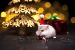 Hámster lindo con el sombrero de santa en bsckground con las luces de la Navidad Fotos de archivo libres de regalías