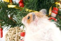 Hámster lindo mullido con el árbol de navidad adornado Foto de archivo libre de regalías