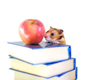 Hámster, manzana roja y libros aislados en el fondo blanco Imagen de archivo libre de regalías
