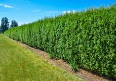 Häck för lång gräsplan med bakgrund för blå himmel Arkivfoto