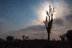Häcken för stenen för konturn för trädet för Starburst solstrålar fördunklar den karga blå himmel Royaltyfri Fotografi