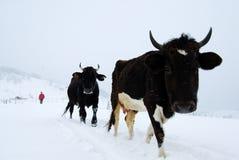 häftig snöstorm Royaltyfri Bild