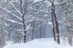Häftiga snöstormen i vinterskogen eller att parkera med den fallande snön royaltyfri bild