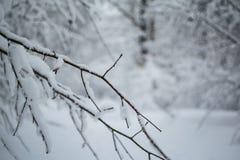 Häftiga snöstormen parkerar in den vita filialen i snö royaltyfri bild