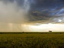 Häftigt regn i masaien Mara Royaltyfri Bild