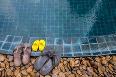 Häftklammermatare på kanten av simbassängen royaltyfri foto