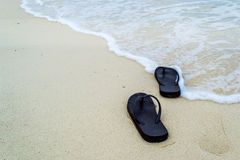 Häftklammermatare på stranden royaltyfria bilder