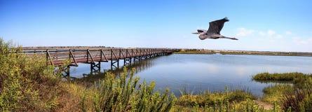 Häger för stora blått över en bro längs det fridsamma och stillsamma Met arkivbild