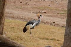 Häger i den Phoenix zoo Arkivfoto