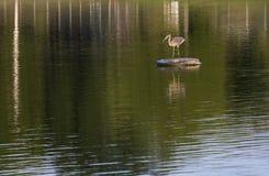 Häger på sjön royaltyfri bild