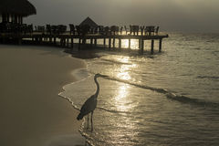 Häger på stranden på solnedgången Royaltyfria Bilder
