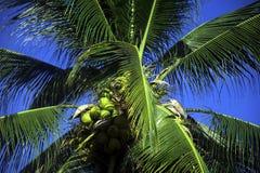 Hägerfågel som vilar på kokospalmen Royaltyfri Bild