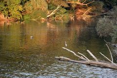 Hägerfågelsammanträde på en filial i den Strymonas floden, Serres Grekland Hösten landskap royaltyfri fotografi