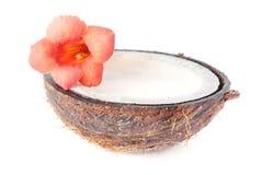 Hälft av kokosnöten med blomman som isoleras på white Arkivfoto