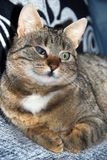 Hälfte-blindes Katzeportrait Stockbild