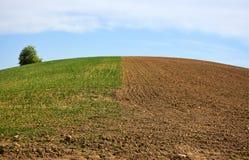 Hälfte das Feld gesät mit Korn und Hälfte bereit zum Korn lizenzfreies stockbild