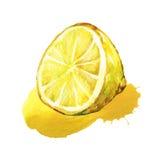 Hälfte der Zitrone Stockbild