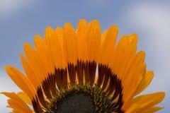 Hälfte eine Blume, die mit Hintergrund des blauen Himmels darstellt Lizenzfreies Stockfoto