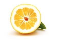 Hälfte eine Zitrone Lizenzfreies Stockbild