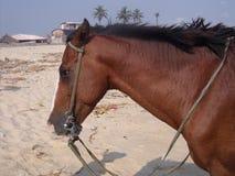 Hälfte eines gesattelten großen Brown-Pferds Lizenzfreie Stockfotografie