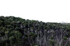 Hälfte gebrannter Wald Lizenzfreies Stockbild