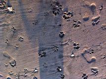 hälften för hundar för bakgrundskatter tystar ned den täta ståenden upp white Arkivbilder