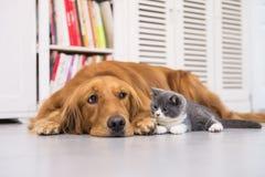 hälften för hundar för bakgrundskatter tystar ned den täta ståenden upp white fotografering för bildbyråer