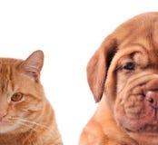 hälften för kattcloseuphunden tystar ned stående Royaltyfri Bild
